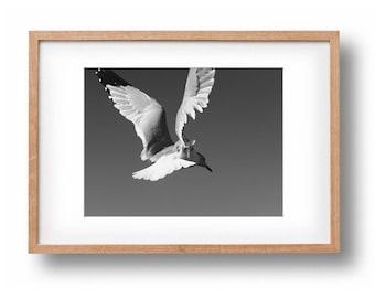 animal print bird print nursery wall art nursery print seagull print seagull photo black and white photography animal print bird photography