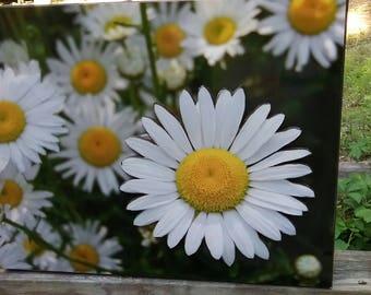 Folk art daisies
