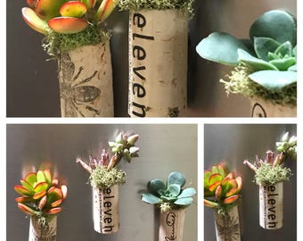 Cork Succulent Magnet Trio, Wine Cork Succulent Garden, Cork Succulents, Wind Cork Magnets, Eco friendly Decor