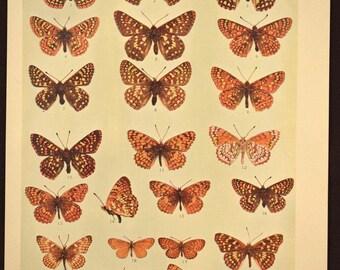 Nature Print Butterfly Wall Art Butterfly Decor Butterflies