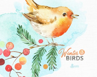 Winter Birds 3. Watercolor holiday clipart, Cardinal Songbird, robin, red, Christmas, card, forest, country, nursery art, nature, realistic