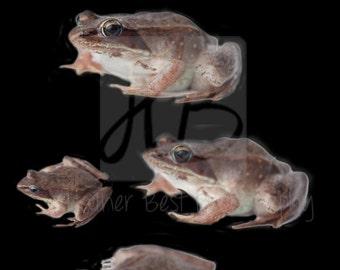 5 Frog  Overlays instant download Png file