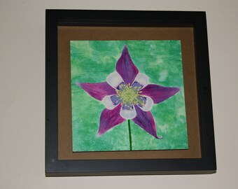 Watercolor columbine flower painting, 6x6 painting framed in a 8x8x1 black shadowbox, original artwork