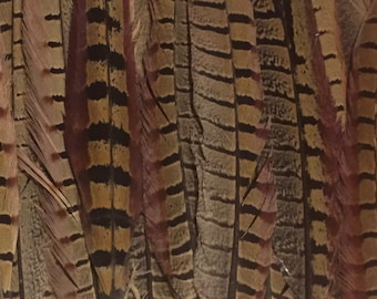 Authentic Pheasant Feathers