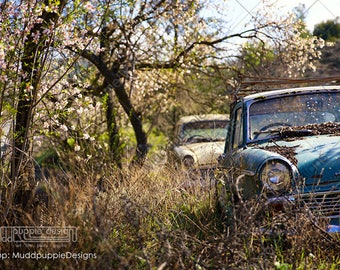 Spring VINTAGE CAR landscape Photography Antique Hillman Scenic Gift Classic old automobiles MuddpuppieDesigns wall art turquoise art deco