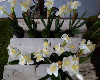 Delicate moss daffodils