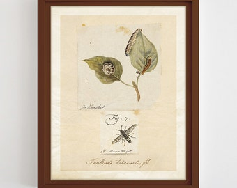 Antique Insect Illustration Insect Print Printable Entomology Print Vintage Insect Wall Art Nature Poster Insect Home Decor Digital Download