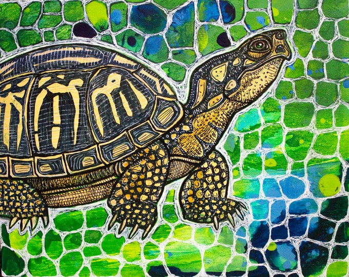 Original Eastern Box Turtle Art by Lynnette Shelley