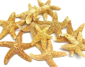 "Starfish - Grade B Sugar Starfish 1.5""-2.5"" Set of 10 - Beach Decor Star Fish Bulk Beach Wedding Coastal Nautical Real Starfish"