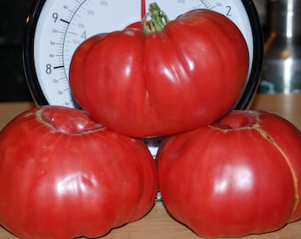 Tomato Giant Oxheart (200 thru 1/4 LB seeds) Sale. Huge Heirloom Fruit! #218