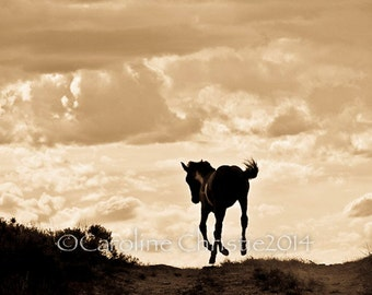 "Horse photo, horse print.Wild Horse Photo from the Sand Wash Basin in Colorado. Title: "" YAHOO!!"""