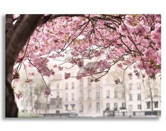 Paris Photo on Canvas, Cherry Blossoms In Paris, Fine Art Photograph Gallery Wrapped Canvas, Large Wall Art, French Home Decor