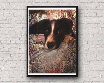 A4 Border Collie Dog Photographic Art Print