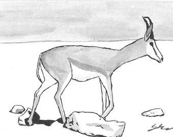 Springbok - Namibia - 6 x 4  original ink paining