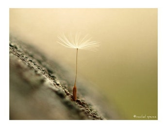Dandelion Seed Pod Photograph Affordable Home Photography Prints Nature Photography Decor Nature Lover Dandelion