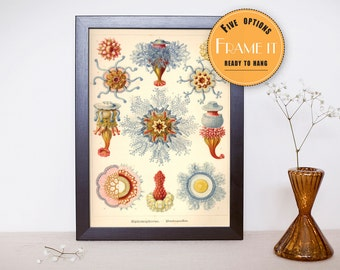 "Vintage illustration from Ernst Haeckel  - framed fine art print, sea creatures,sea life, 8""x10"" ; 11""x14"", FREE SHIPPING - 276"