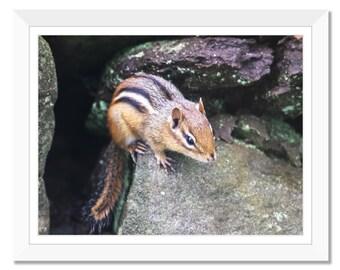 Chipmunk, Rock, Photograph Print, Print at Home, Digital Print, Wall Art, Animal, Instant Download