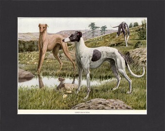 Greyhounds 1919 Signed Dog Print by Louis Agassiz Fuertes Vintage Painting Print Mounted with Mat  Greyhounds print Greyhound Dog Print
