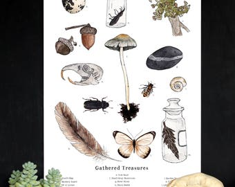 Gathered Treasures - Nature Collection - School Room Wall Art - 12 x 18 Poster - Montessori, Educational, Natural History, Nature Study