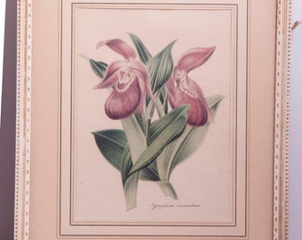 1950s set of 2 vintage flower prints. Luxemburgia ciliosa, cyprideium marcanthum, aka lady slipper