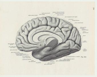 Brain Print Lithograph human body medical anatomic anatomical wall decor anatomy anatomy drawing brain gift