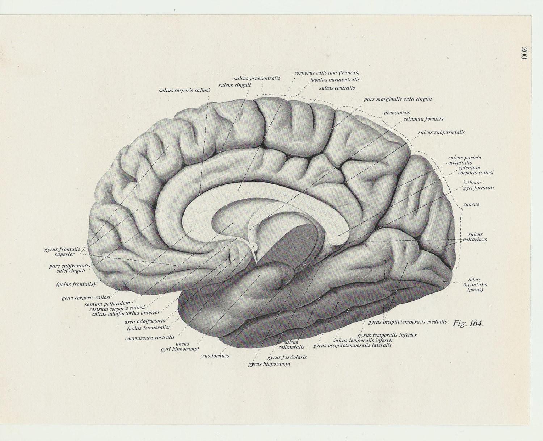 Druck-Lithographie menschlichen Körper medizinische