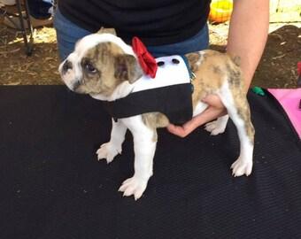 Tuxedo Vest for dog