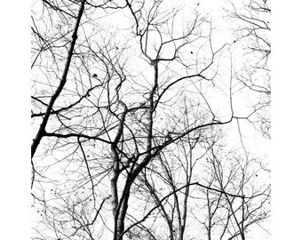 Black White Modern Art Decor, Minimalist Photography, Tree Photo, Sky Print, Abstract Art, Nature Photography, Fine Art Photography