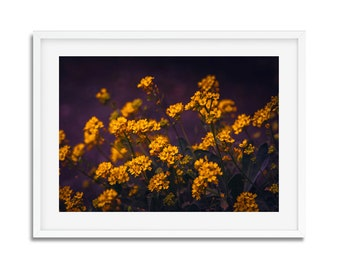 Flowers yellow - spring in Paris - digital download - photography wall decor