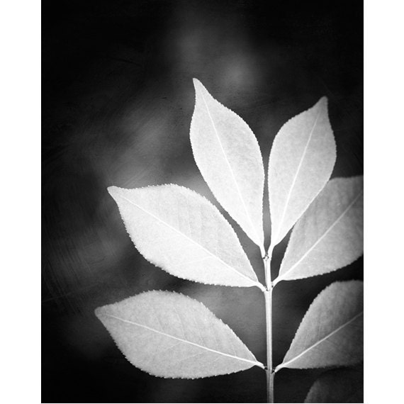 Black and white photography nature leaf black white photos voltagebd Images