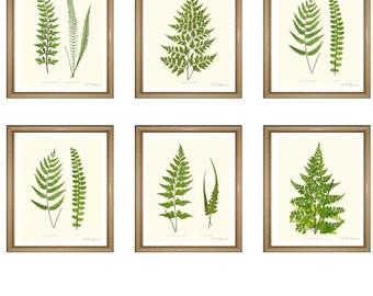 "Fern Prints Set. ANY 6 fern prints. Fern Wall Art Set. Fern print set.  8x10"" 11x14"""