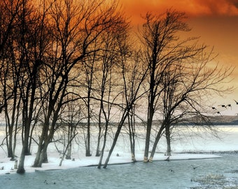 Abstract landscape photography surreal dreamy winter nature trees birds sepia - 'Flight'  8 x 10