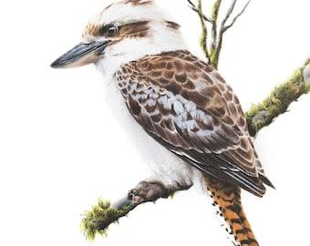 Bird Art - Kookaburra Art Print 8x10 - Kookaburra Art - Australian Bird Art - Australian Wildlife Art