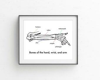 Anatomy of arm, wrist, and hand vintage style printable