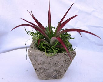 Red Airplant /  Airplant Holder