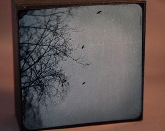 4-5 Crows 4x4 Fine Art Photograph on Wood Panel
