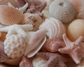 10 Medium Size Sea Shell Soaps