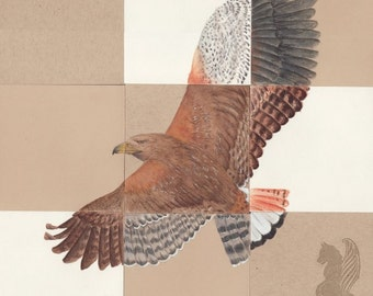 Pieces: Hawks - Original Colored Pencil