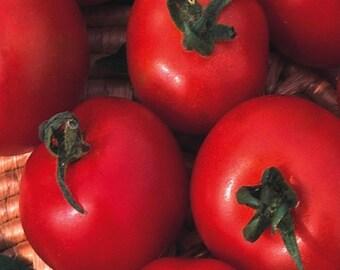 Tomato Moneymaker 240 seeds Vegetable