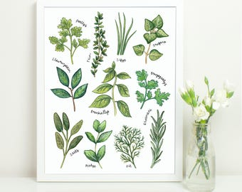 WELSH Culinary Herbs Kitchen Print. 10x8. Common Cooking Herbs. Botanical Study Style Illustration. Welsh Gifts.