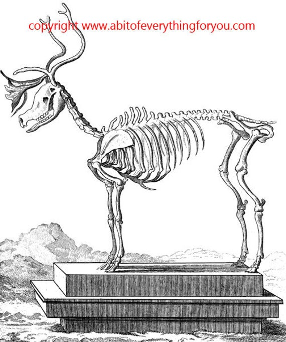 deer skeleton animal anatomy printable art clipart png download digital vintage image graphics science black and white artwork