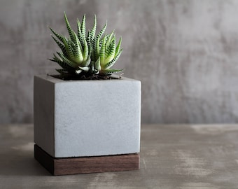Concrete and walnut wood / Succulent planter
