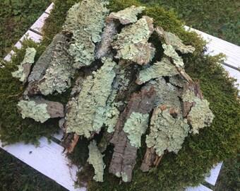 Lichen Covered Bark, Floral Design, Fairy Garden, Vivarium, Woodland Wedding, Terrariums, Organic, Untreated, Rustic