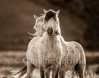 """Horse Photograph, Wild Horse Photo """"The Renegades"""""""
