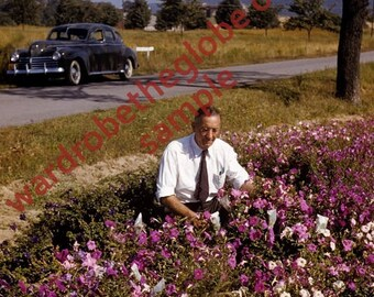 1940s Man in The Petunia Flowers. Antique 30s 40s Classic Car. Vernacular Found Photo. Kodachrome Color Slide. DIGITAL DOWNLOAD 4 Printing