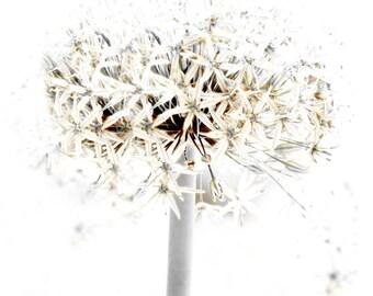 Shabby Chic Decor Allium White Flower Gray Sepia Floral Minimalist Wall Art