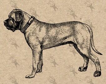 Vintage image Dog Dogge Mastiff picture Instant Download Digital printable clipart graphic scrapbooking burlap tote towels t-shirt HQ 300dpi