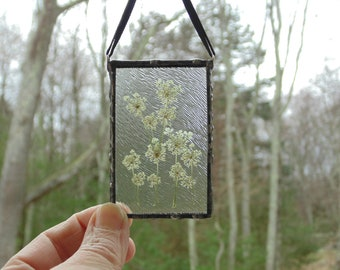 Pressed flower stained glass suncatcher, Queen Anne's lace flower terrarium ornament, gift for her