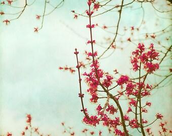 Pink Flower Photography, Spring Wall Art, Aqua Blue & Pink, Flower Picture, Feminine Art Print
