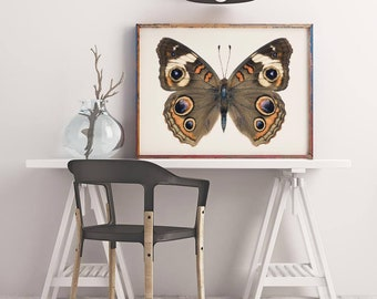 Brown Butterfly Photograph, Nature Photograph, Large Wall Art Print, Buckeye Butterfly Print, Insect Art, Natural History Print